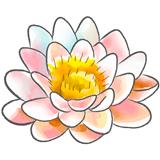 Fleur de lotus illustrant les bienfaits de cours de yoga en ligne sur la plateforme : yoga-en-ligne.com